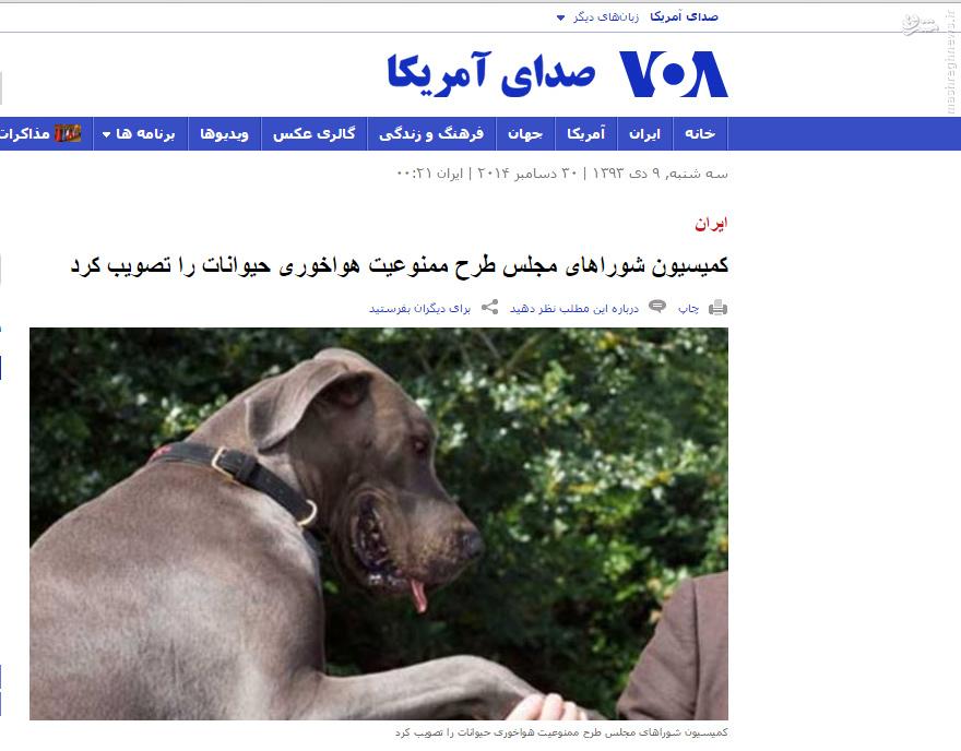حیوان خانگی ازدواج جالب ازدواج با سگ ازدواج با خر ازدواج با الاغ