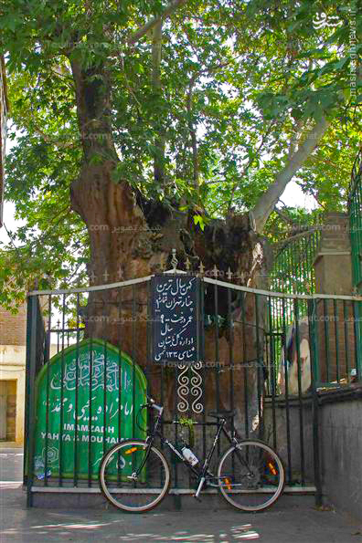 عکس/ کهن سالترین موجود زنده تهران
