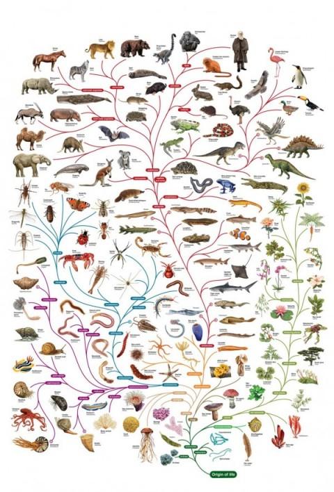 نزاع میان علم و داروین بر سر چیست؟ + فیلم و تصاویر // در حال ویرایش