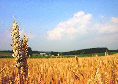 تحقیق رایگان در مورد شغل کشاورزی