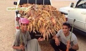 نسل کشی سوسمارها در عربستان+عکس