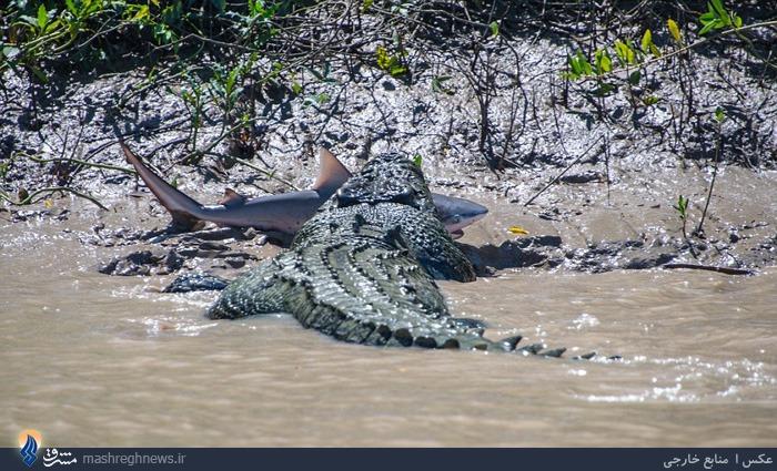 عکس/وقتی شکارچی شکار میشود