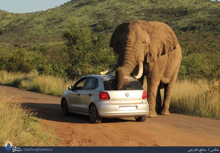 عکس/حرکات عجیب یک فیل