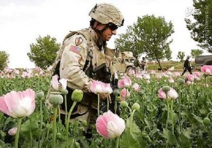 وقتی آمریکا بر ضد ملحدان اسلام ستیز قیام کرد!/ نقش مواد مخدر در رشد تروریستهای تکفیری