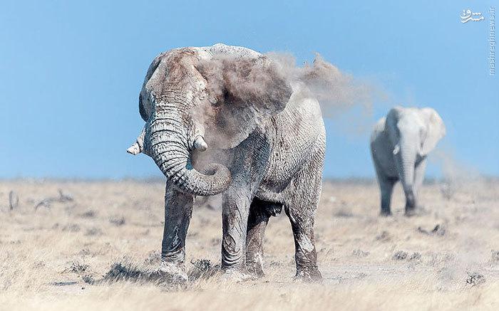 تصاویر دیدنی از حیات وحش