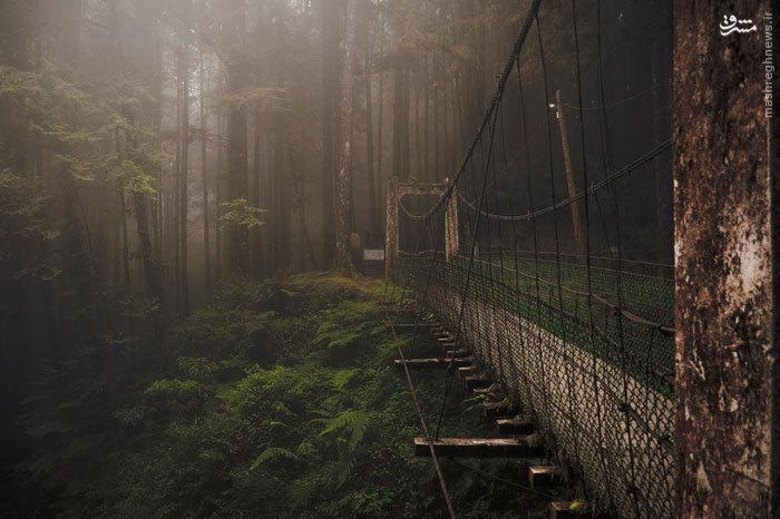 پل های خاص و زیبا در جهان
