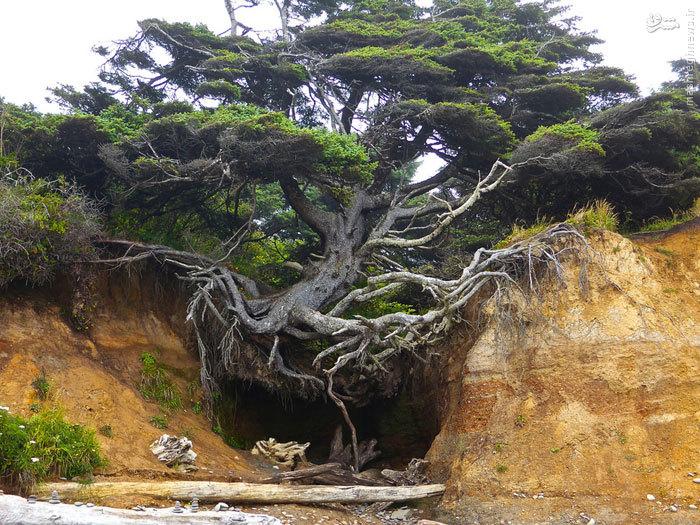 طبیعت خیره کننده