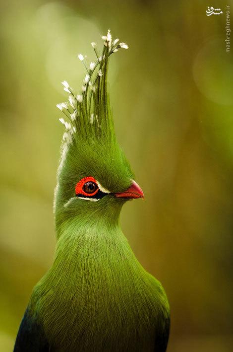 پرندگان عجیبی که هرگز ندیده اید