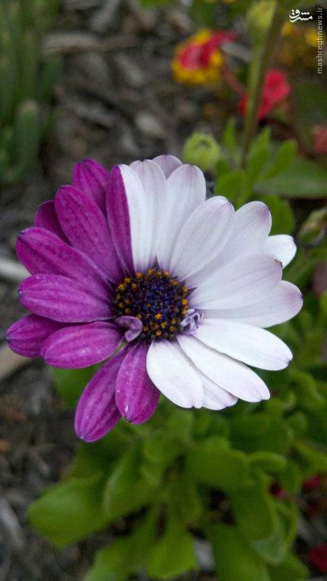 گل های عجیب و غریب