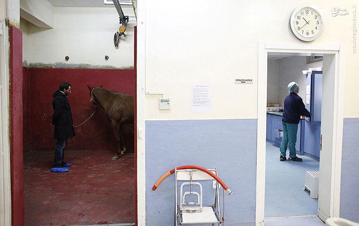 بیمارستان اسب ها