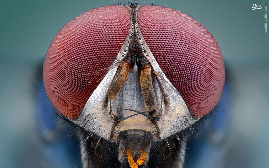 چهره حشرات