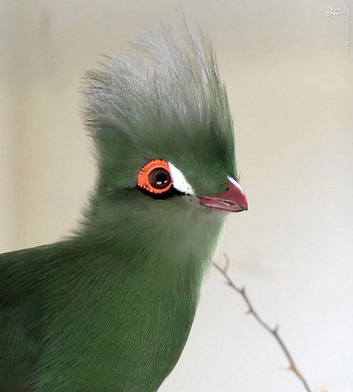 پرنده ای شگفت انگیز در آفریقا
