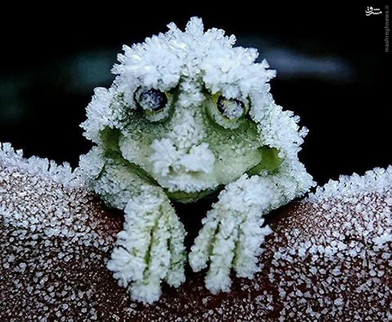 حيوان عجيبي که در زمستان می میرد و در بهار زنده می شود!! + عكس