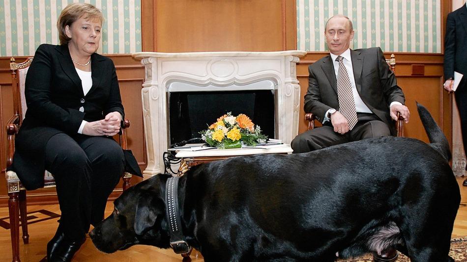 پوتین درباره ماجرای سگ خود و مرکل حرف زد+عکس