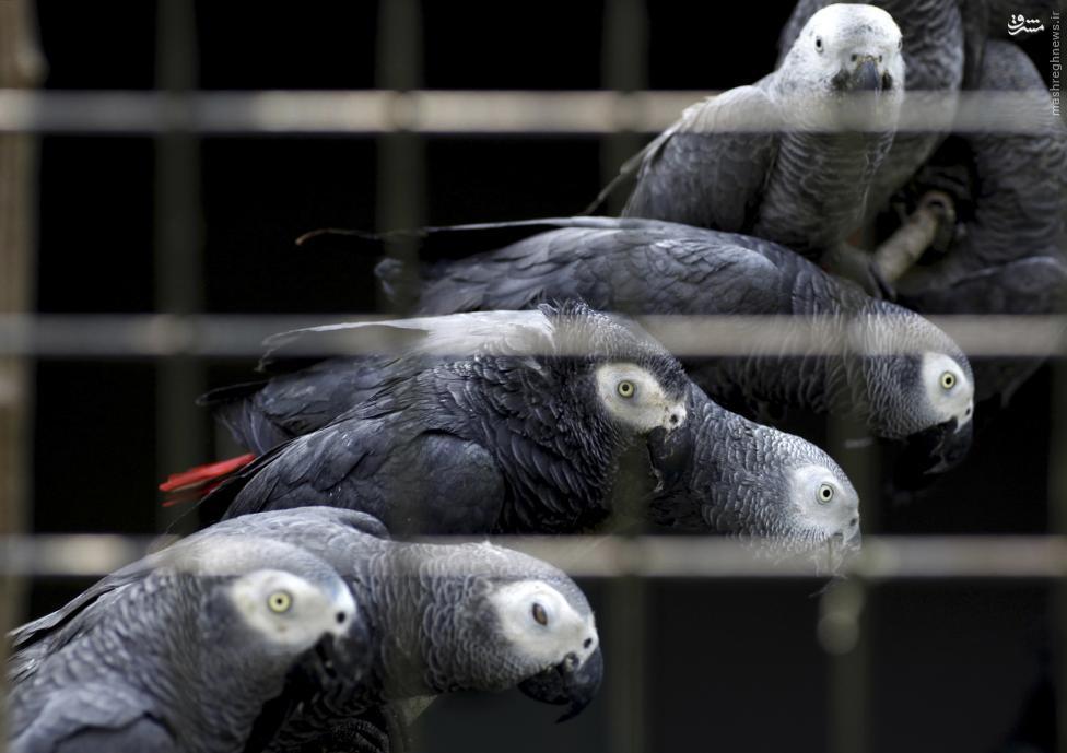قاچاق حیوانات
