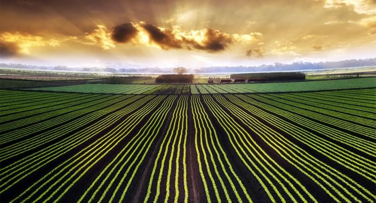 وقتی آمریکا به فکر اقتصاد مقاومتی در بخش کشاورزی است/برنامه های ایالات متحده در جهت تداوم رهبری کشاورزی جهان