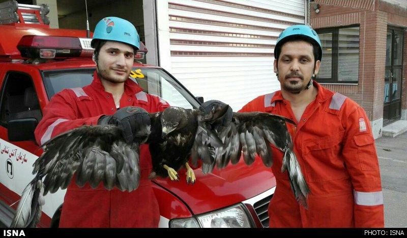 هجوم عقاب به خانهای در مشهد +عکس
