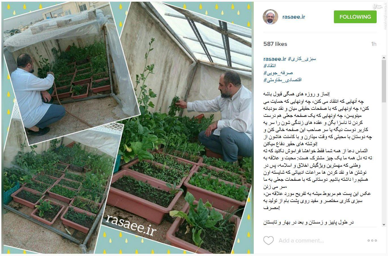 سبزیکاری رسایی در راستای اقتصادمقاومتی+عکس
