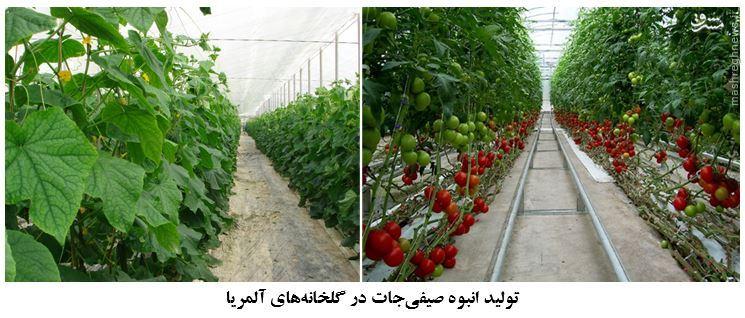 فرصت 60 برابری کسب درآمد از تولید کشاورزی هر متر مربع زمین /شهرکی در اسپانیا که بیش از 3 برابر ایران گلخانه دارد