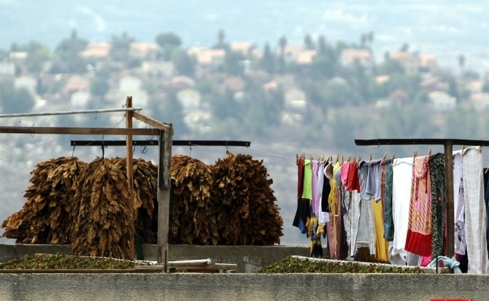 عکس/ شغلی عجیب در فلسطین