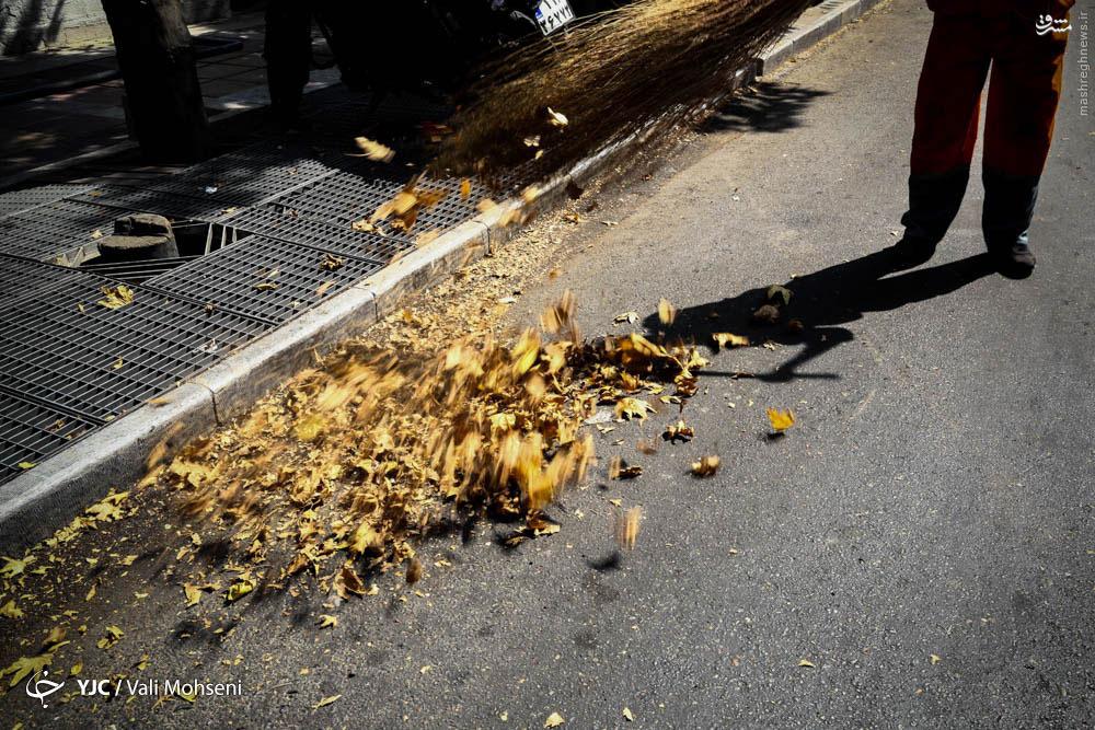 خزان زود هنگام درختان تهران