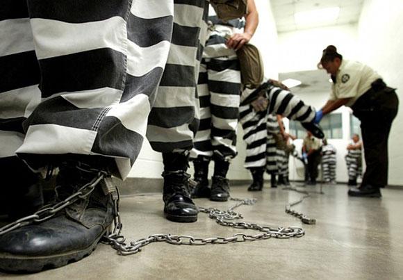 بردها در قفس آهنی سرمایه داران آمریکایی+عکس