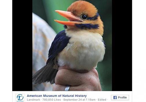 کشتن یکی از ناشناختهترین پرندگان دنیا اندکی پس از کشف +تصویر