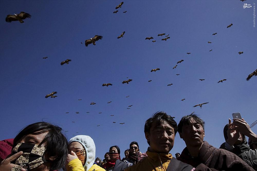 انسان وحیوان image عکس/ قومی که اجسادشان را به کرکسها هدیه میکنند