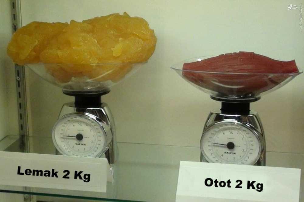 عکس/ تفاوت 2 کیلو عضله با 2 کیلو چربی