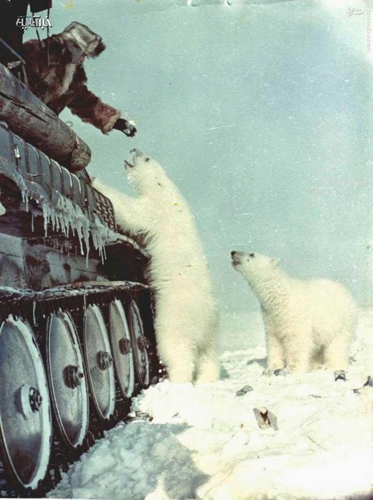 عکس/ غذا دادن به خرسهای قطبی از داخل تانک