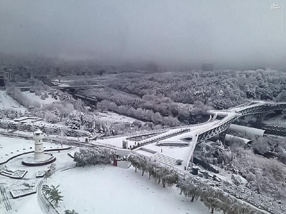 عکس/پل طبیعت در یک روز برفی