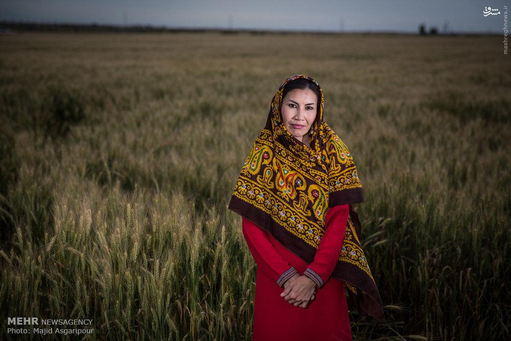 عکس سگ ترکمن صحرا
