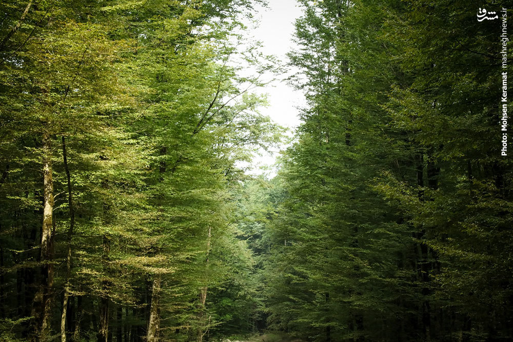 """""""جنگل لاجیم""""بهشت روی زمین در شهر ساری"""