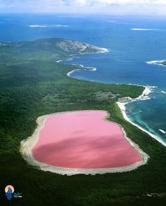 دریای صورتی: در غرب استرالیا یک دریاچه قرار دارد که رنگ آن کاملا صورتی است. این دریاچه صورتی این روزها به یکی از عجیبترین نقاط زمین تبدیل شده است و دانشمندان علت رنگ آن را حضو جلبک های زیاد صورتی در این منطقه می دانند.