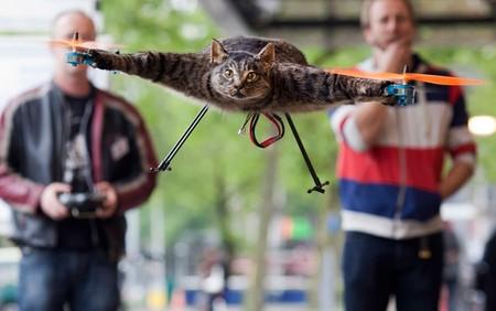 به پرواز درآوردن گربه مرده در آمستردام هلند – 3 ژوئن 2012