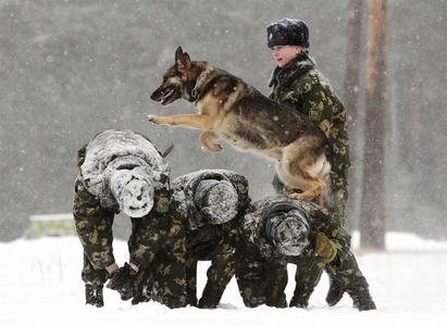 استخدام سگ های نظامی براس استفاده در گارد مرزی،بلاروس