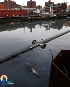 ورود یک دلفین به کانال فاضلاب نیویورک ـ آمریکا