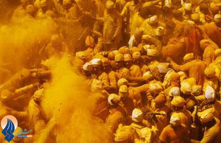 جشن زردچوبهها _ هند