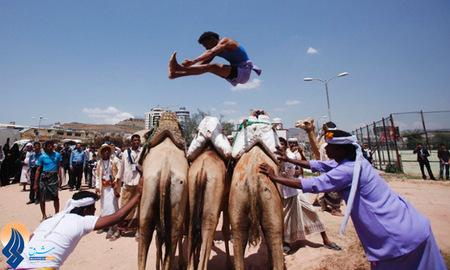 مسابقه پرش از شتر،بخشی از جشنواره تابستانی صحرانشینان یمنی
