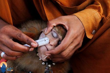 آرایشگری میمونهای خانگی در خیابانهای شهر لاهور پاکستان