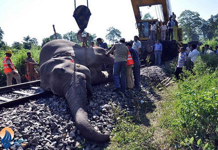 مرگ یک فیل برروی ریل قطار در جنگلهای بنگال هند