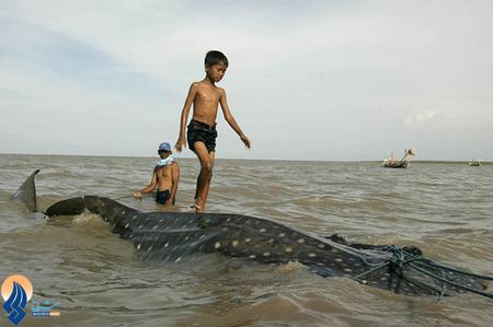 صید یک نهنگ توسط ماهیگیران اندونزیایی در سواحل جاوه