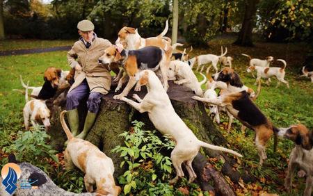 یک پرورش دهنده سگهای شکاری در جنگلهای نوسفورد _ آلمان