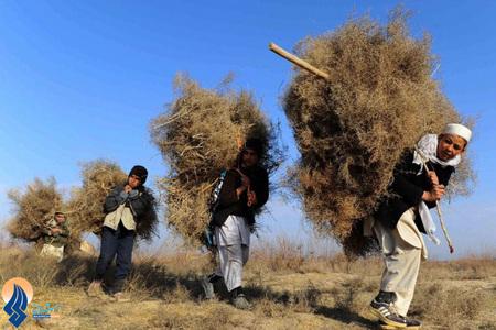 جمع کردن هیزم برای درامان ماندن از سرما توسط کودکان افغان