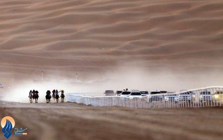 مسابقه سوارکاری اسبهای اصیل عرب در ابوظبی امارات