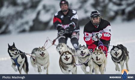 رقابتهای سالانه سورتمه سواری در بر روی دریاچه یخ زده سرنا در کانادا