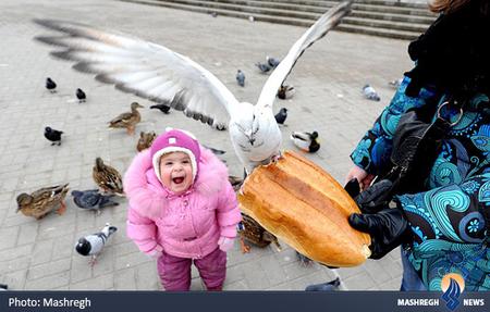 شادی یک کودک از غذا دادن به پرندگان