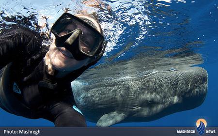 شنا کردن با نهنگ در دومینیکا