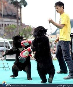 المپیک سالانه حیوانات در چین