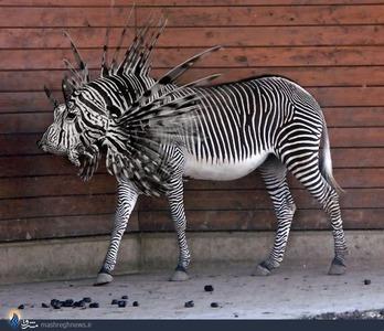 تصاویر/ حیوانات جدید فتوشاپی